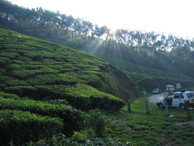 Our trip to see the tea plantations in india